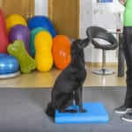 Hund sitzt vor Trainer
