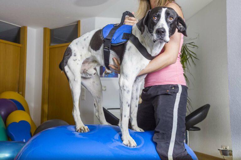 Hund steht auf Gymnastikball