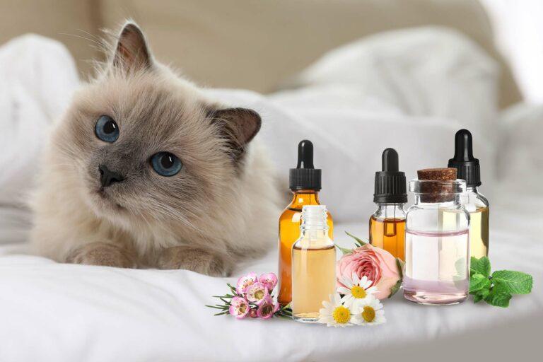Katze vor Fläschchen