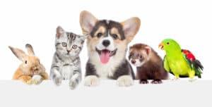 viele Tiere bei Tierheilpraktiker