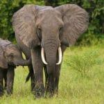 Elefant Alterna Medica Foto