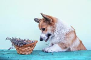 Hund bei Homöopathie für Tiere alternaMedica
