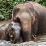Wappentier Elefant